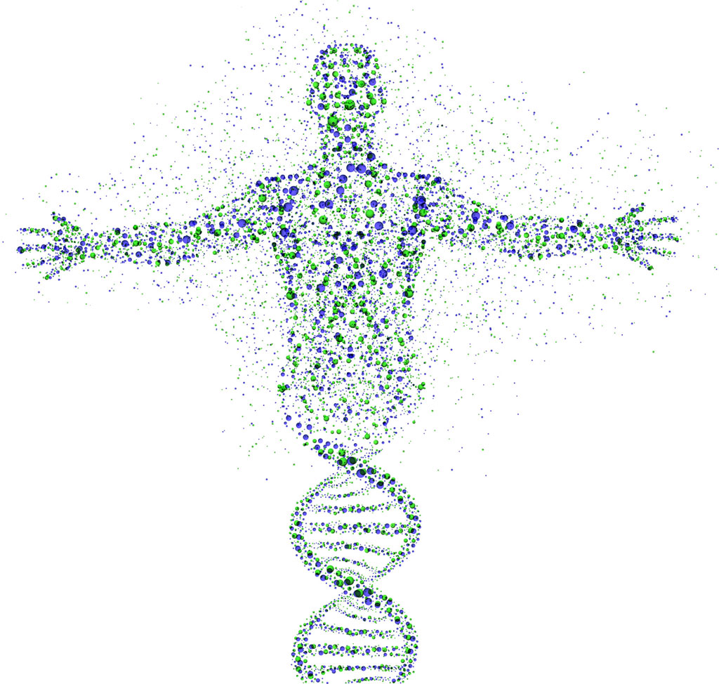 chromatid and chromosome relationship test