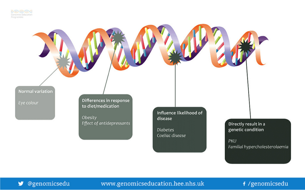 how many genes do humans have genetics digest